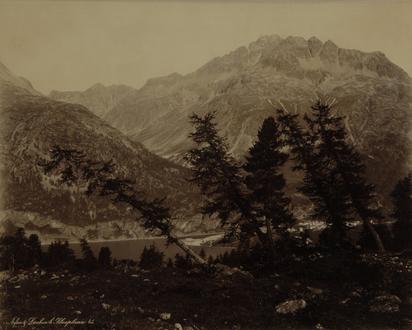 Guler Romedo, Arven und Lärchen bei Silvaplana