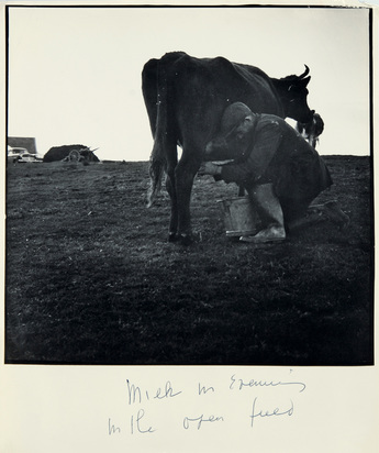 Lange Dorothea, Milk in Evening in the Open Field (Ireland), 1950's