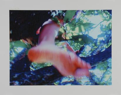Rist Pipilotti, Baum der Erkenntnis