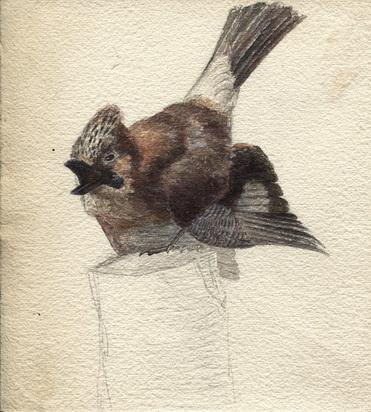 Bodmer Karl, 4 sheets: Oiseau, 1880; Poussin de 15 jours, 1874; Mésange charbonnière; Oiseau