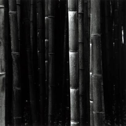 Burkhard Balthasar, Bambus