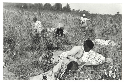 Cartier-Bresson Henri, Cotton Pickers