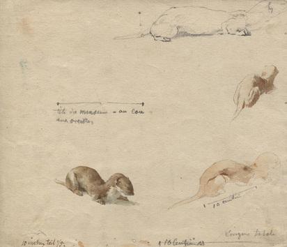Bodmer Karl, 5 sheets: Nid de cortelet couronné, 1879; Fouine, 1874; Fouine (3)