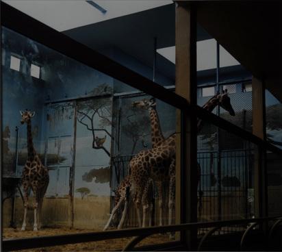 """Höfer Candida, Zoologischer Garten Paris, 1997 aus """"Portfolio mit 13 Farbfotografien"""""""