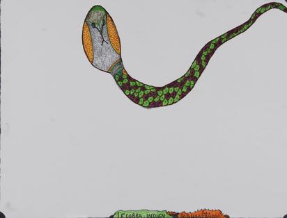 Robillard André, Le cobra indien