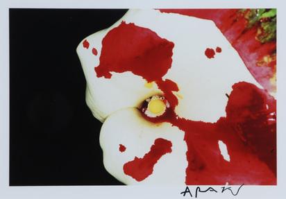 Araki Nobuyoshi, Flowers