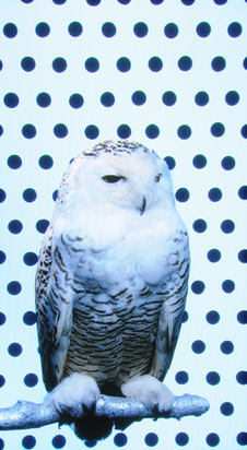Wilson Robert, Snow Owl