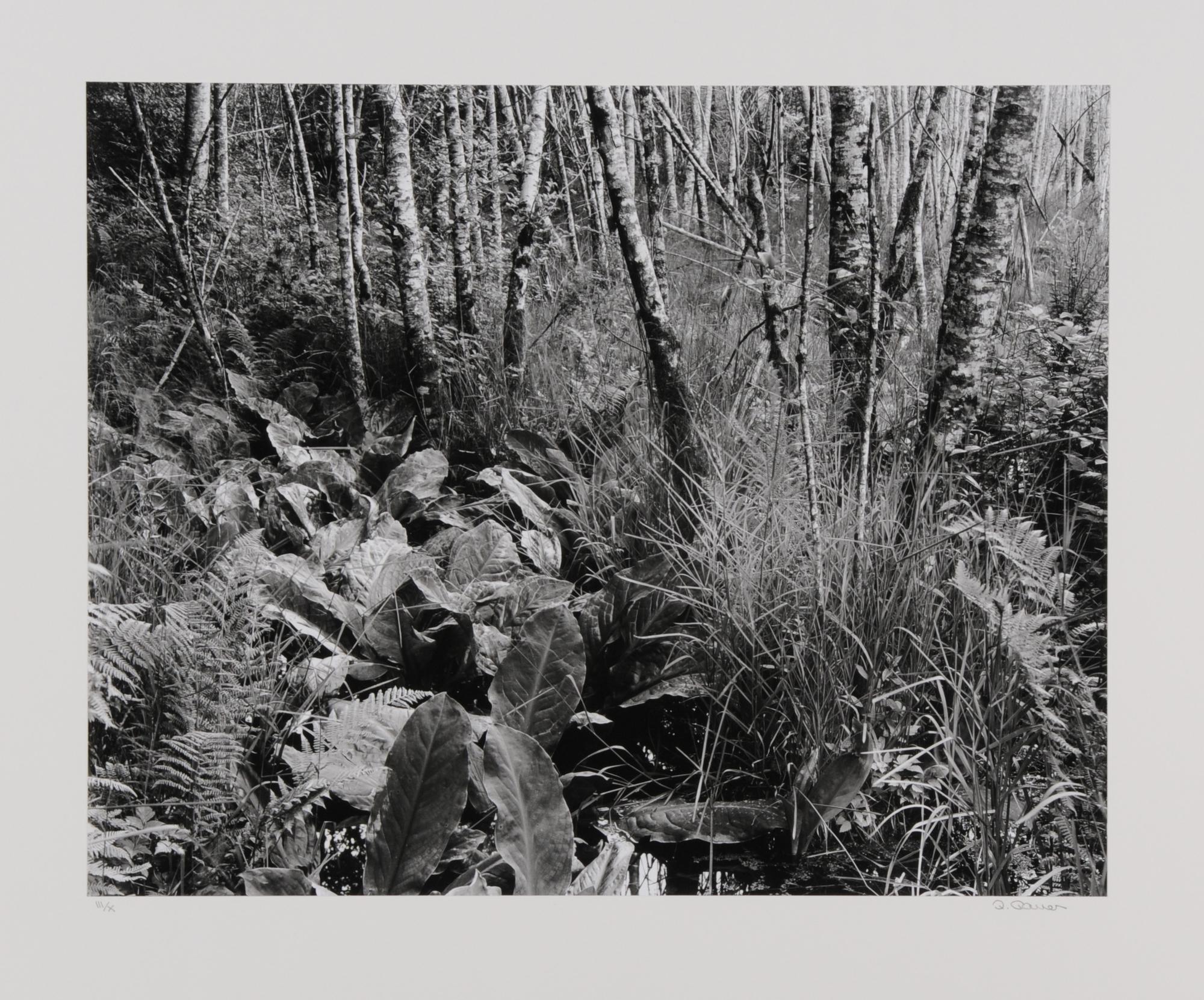 Gasser Peter, Sumpfpflanzen Oregon