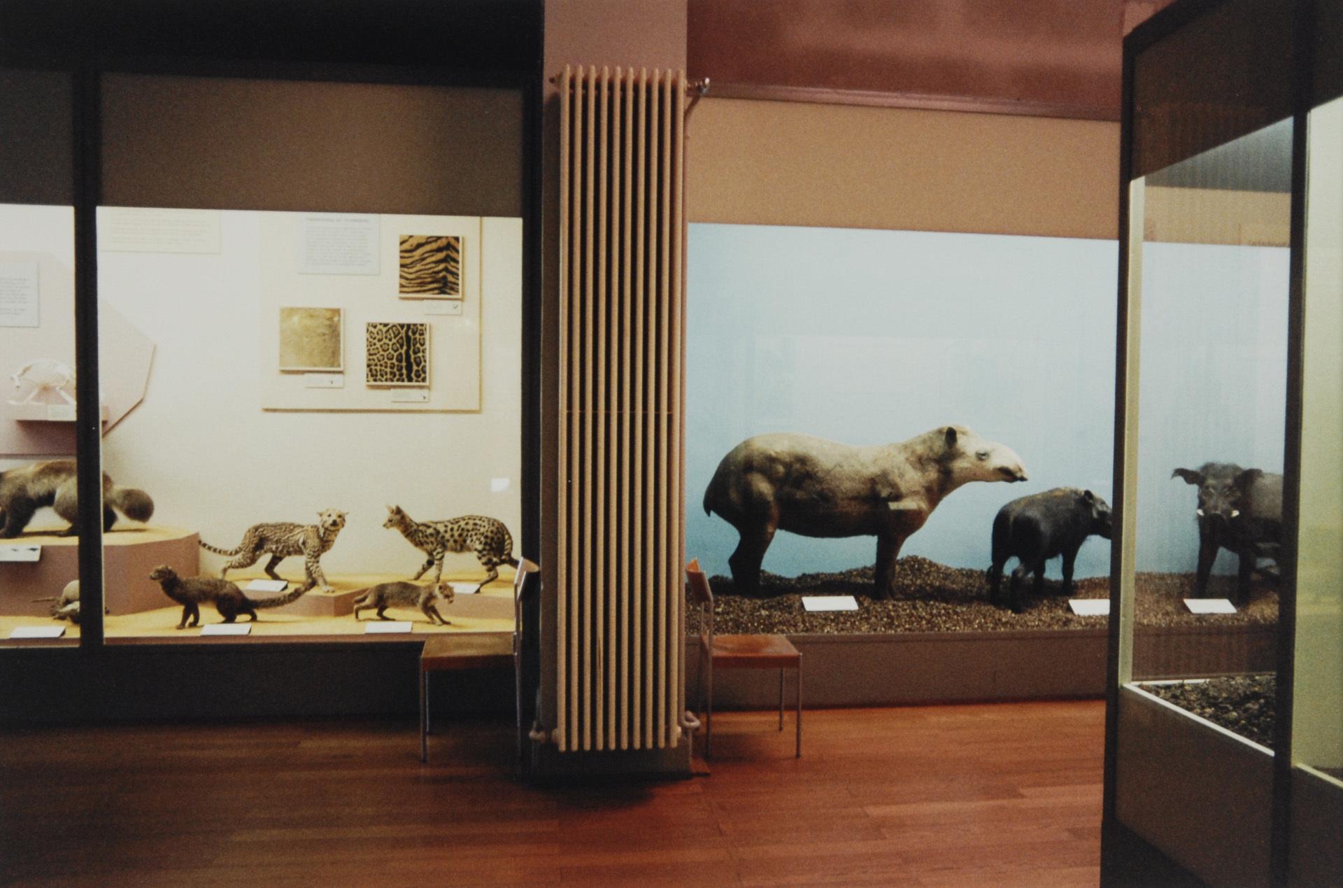 Höfer Candida, Naturhistorisches Museum Basel
