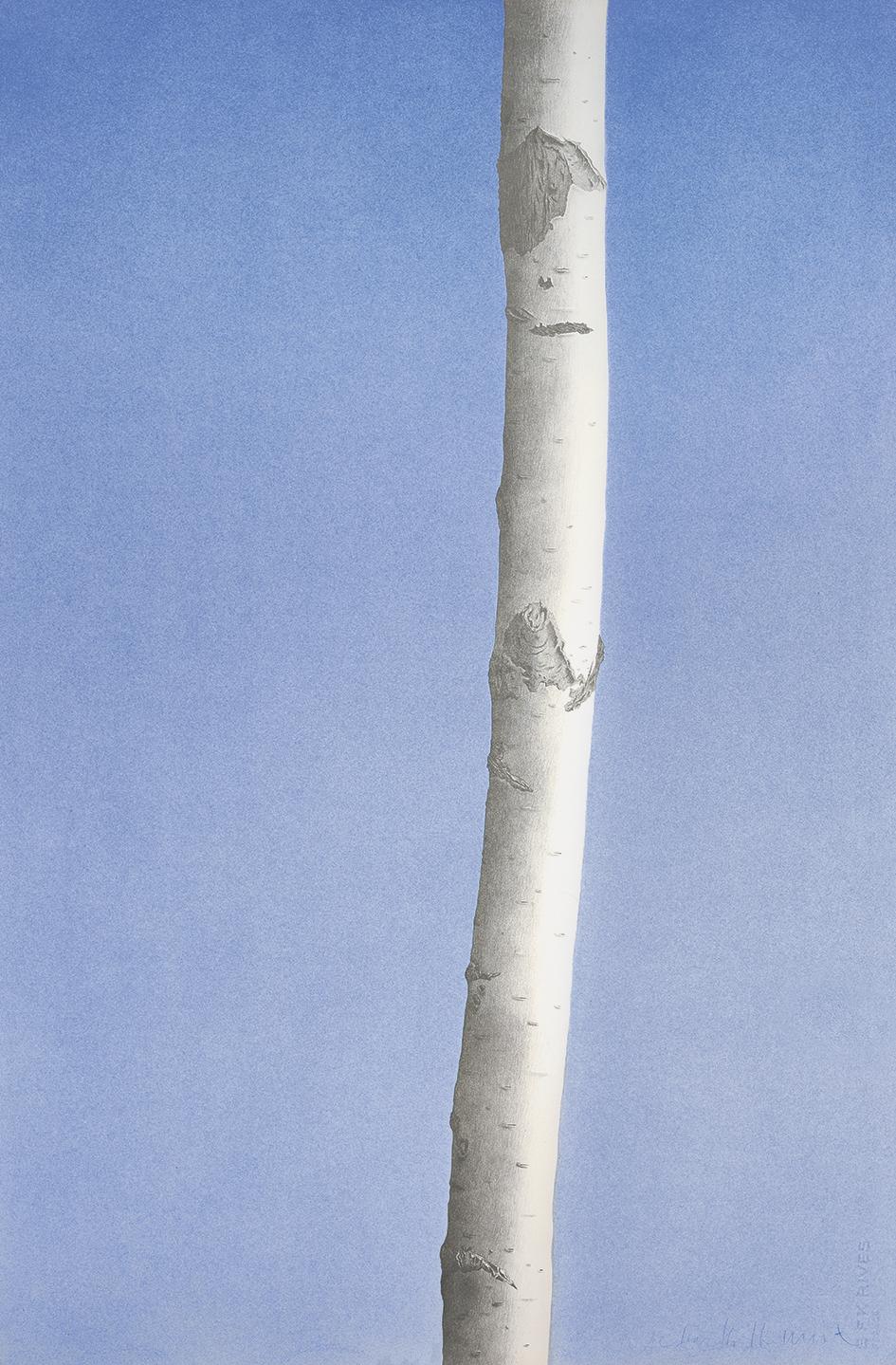 Hofkunst Alfred, Birch Tree