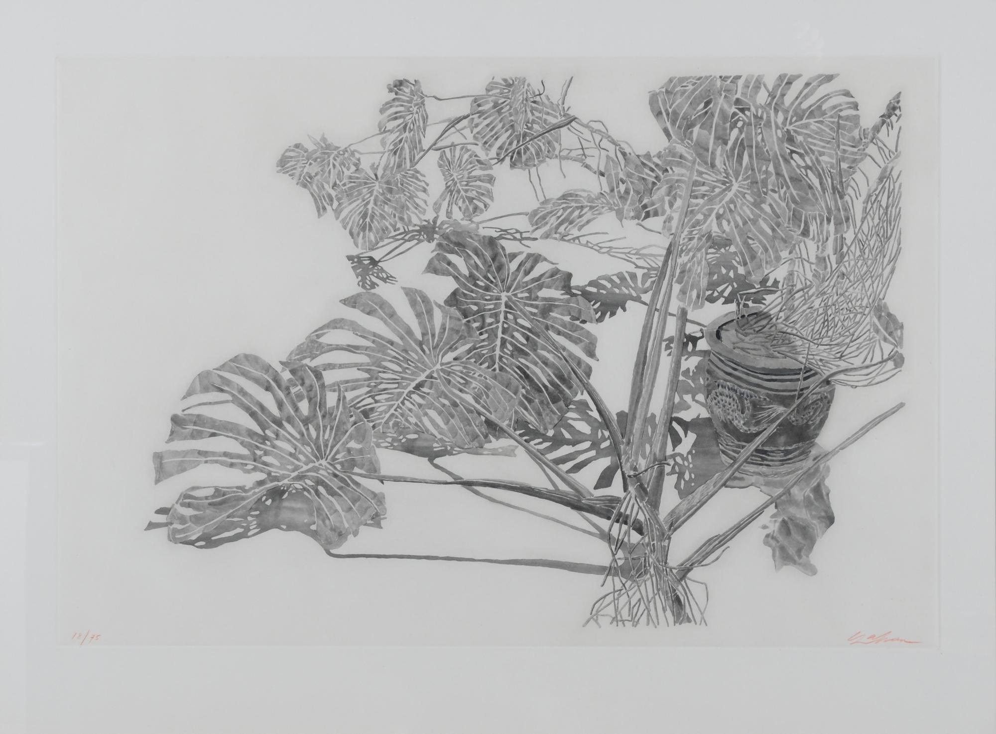 Szafran Sam, Philodendrons (gris)