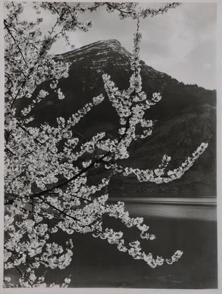 Frühling am Zugersee, im Hintergrund Rigi