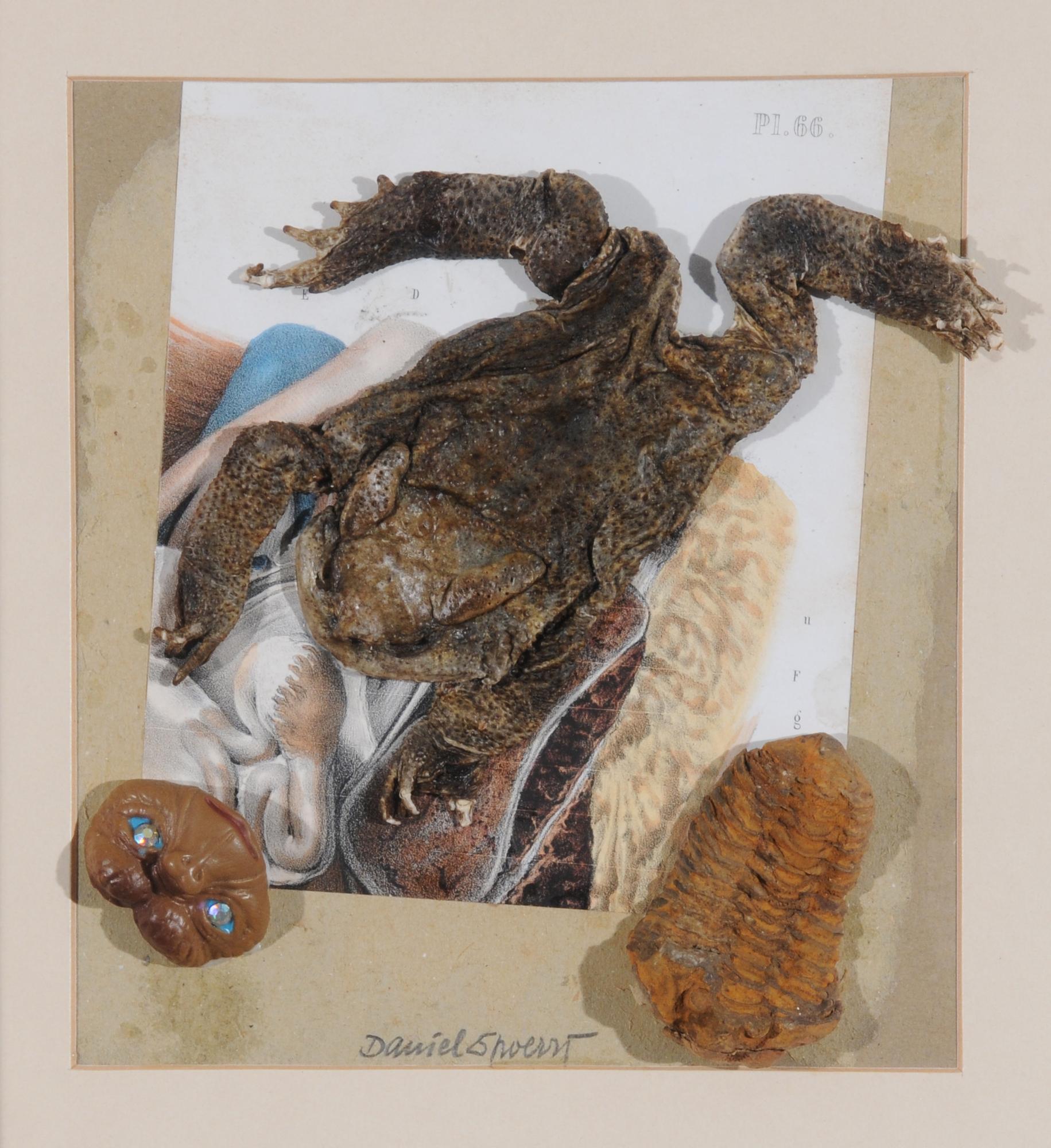 Spoerri Daniel, E.T. entdeckt erstaunt in der Kröte und der Urlaus seine Ahnen...