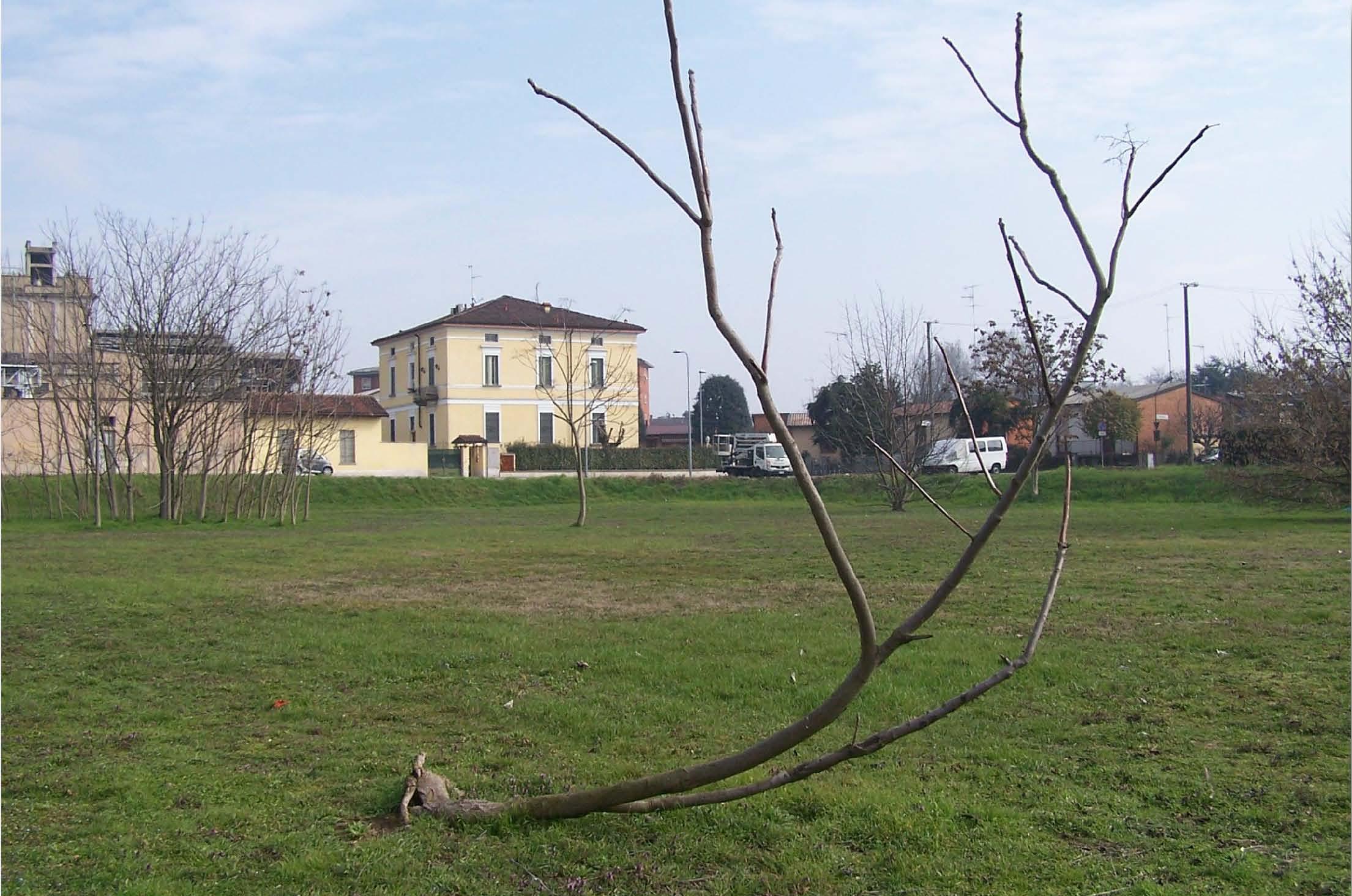 Un albero per ogni bambino: in via Bredina il Bosco dei Nati. Grazie agli studenti dello Ial che hanno elaborato il logo