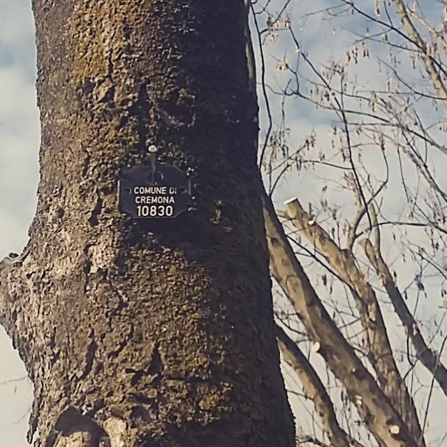 Verde, stiamo censendo gli alberi comunali. Così monitoriamo la salute delle piante e programmiamo interventi!