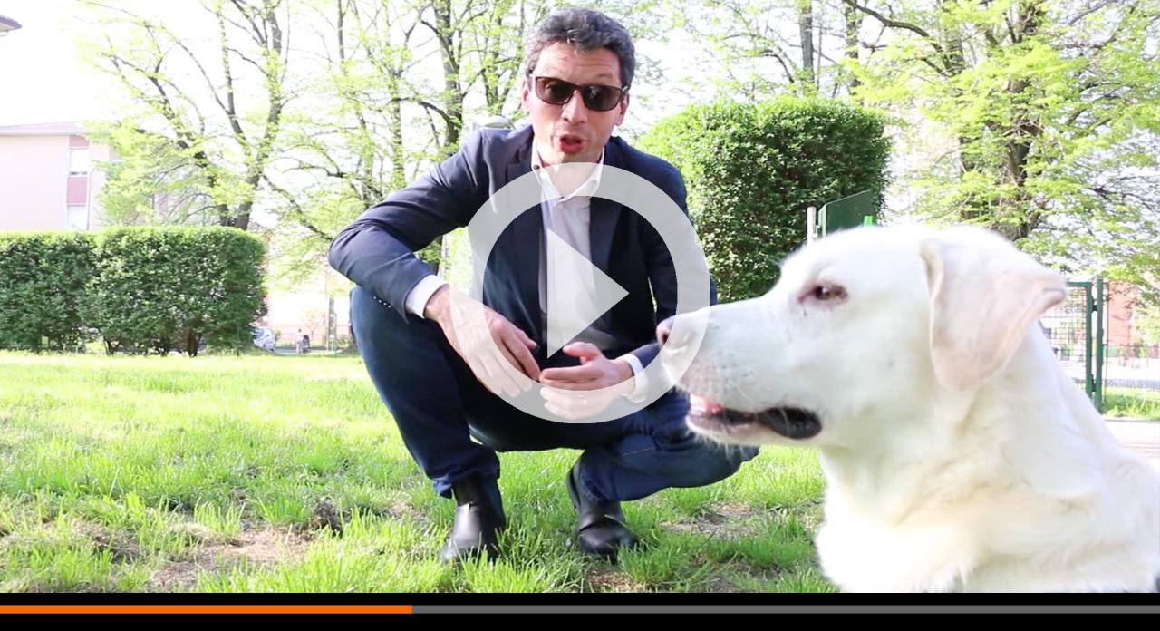 Cacche dei cani: cestini dedicati, multe per chi non le raccoglie e la campagna 'Lo faresti a casa tua?'