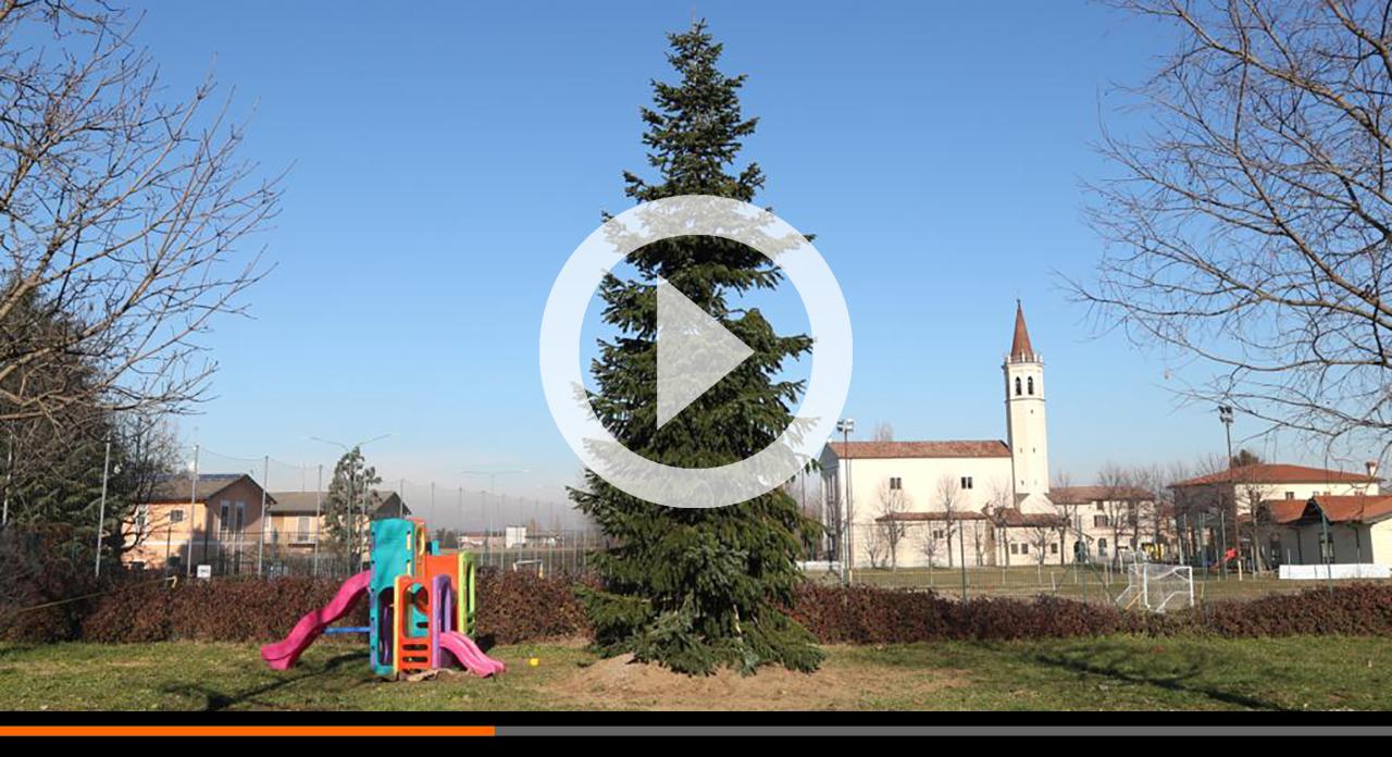 L'albero di Natale della piazza ripiantato alla scuola del Boschetto!