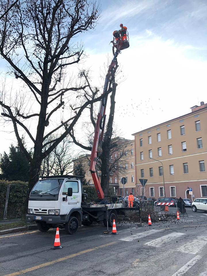 182 nuovi alberi a Cremona! Ripiantumiamo in varie zone e scuole della città