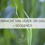 De oerkracht van Lever- en Galblaas + Sequence om deze energie vrij te laten stromen