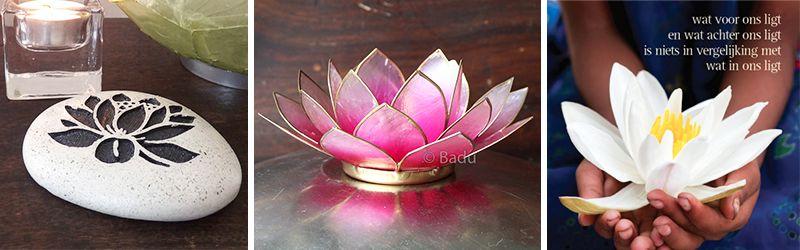 lotusbloem artikelen