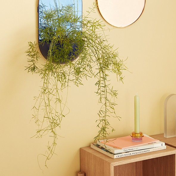 Design Kerzenständer - 2er Set, Glas, amber/lila
