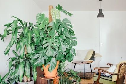 urban-jungle-pflanzen