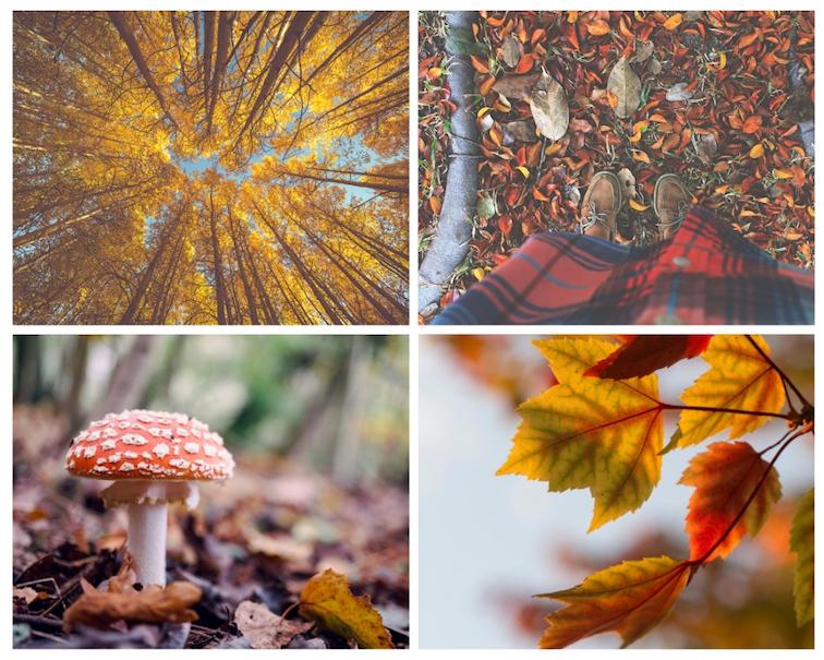 Herbst-Fotos-Tipps-Perspektiven-Details