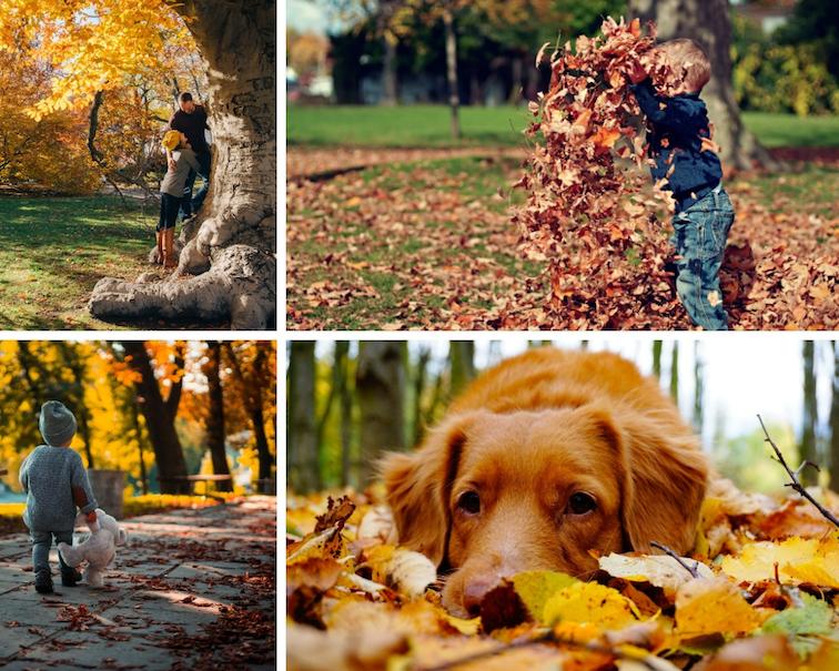 Herbst-Fotos-Tipps-dokumentieren
