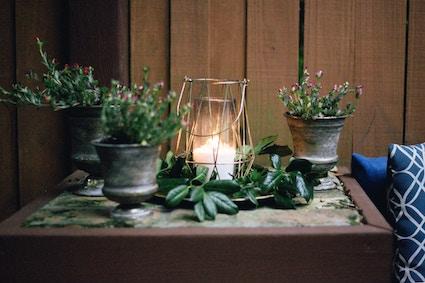 Licht-Gruen-Pflanzen