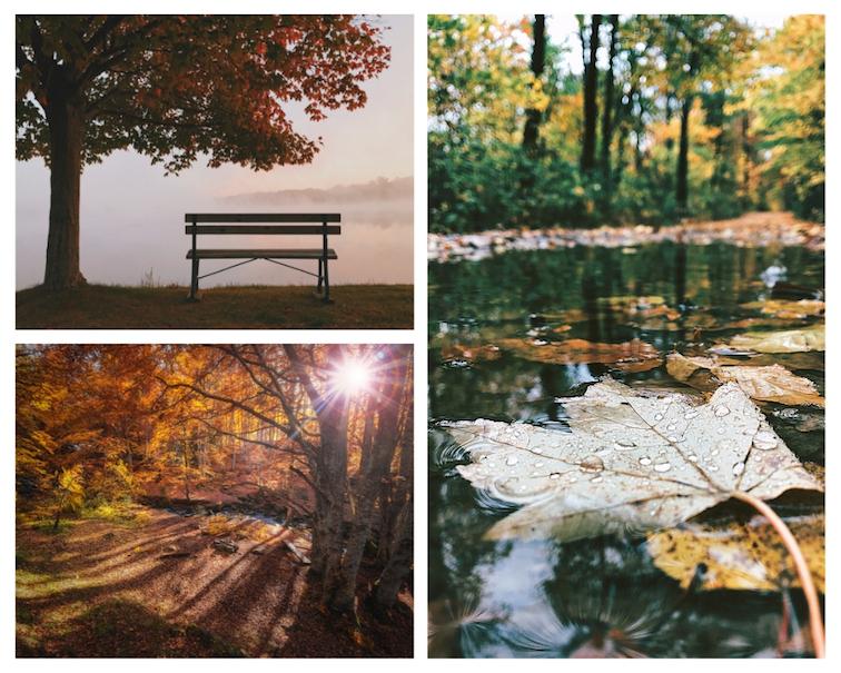 Herbst-Fotos-Tipps-Licht-WetterKmtEJ5BLZMYhy