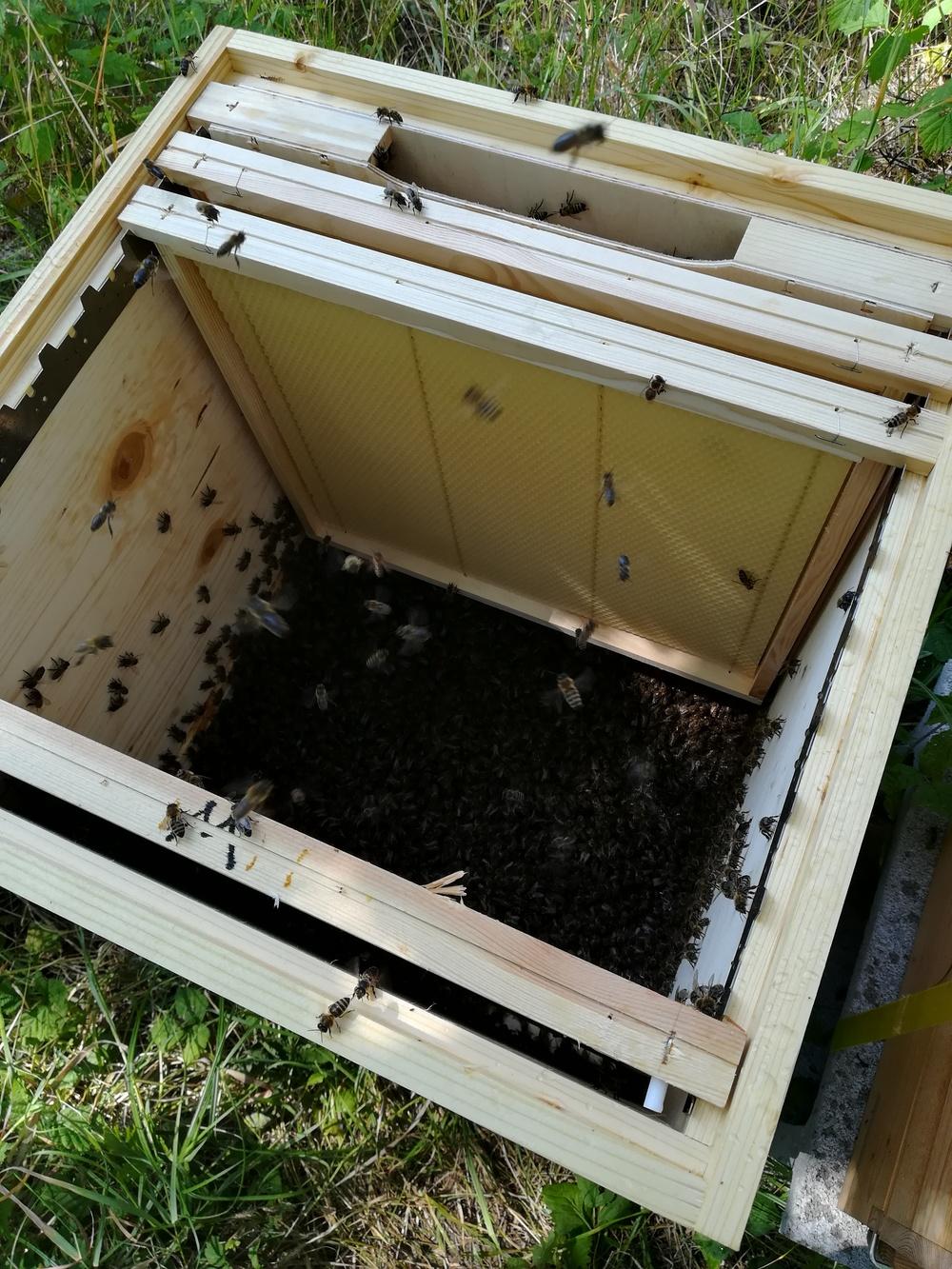 Bienen c hektar nektar