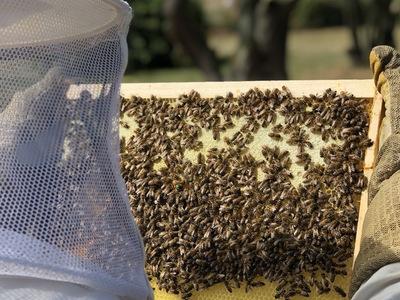Imker rettet bienen c hektar nektar
