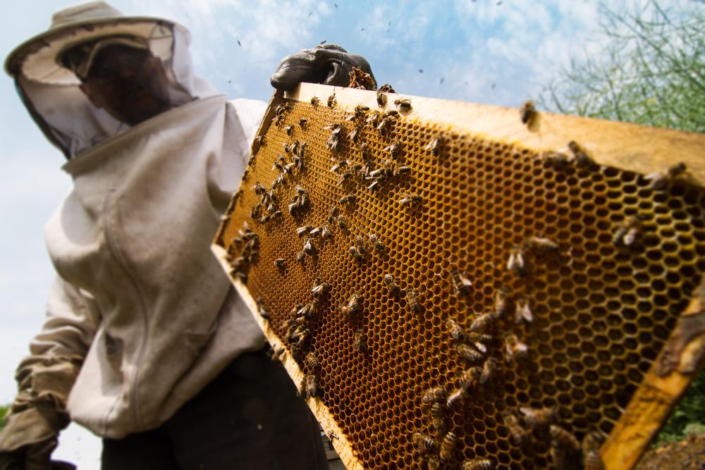 Imker bienenwabe bienen
