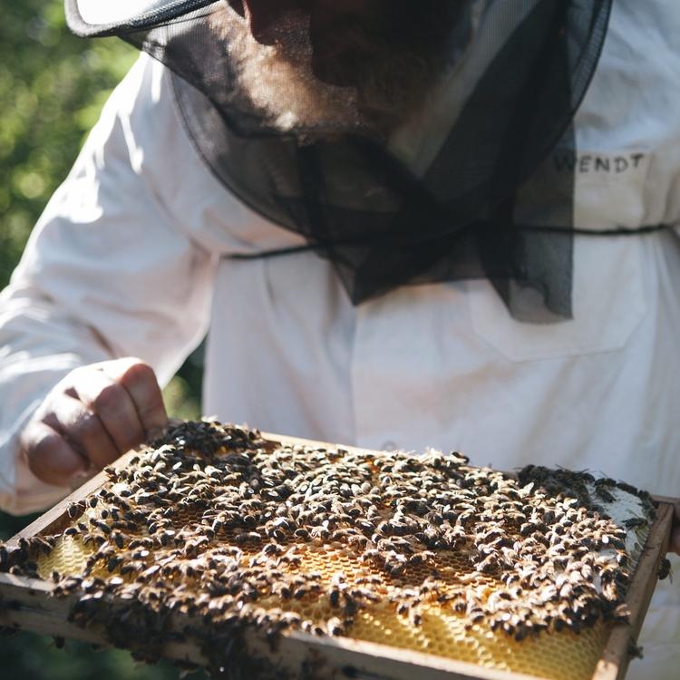 2 bienenschutz mit hektar nektar und faie %28c%29 hektar nektar