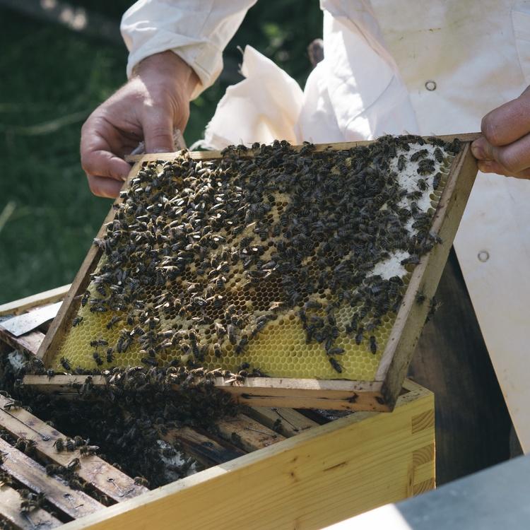 1 bienen und imker c hektarnektar