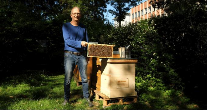Kölner Südstadt: E WIE EINFACH und Imker Ansgar Scheuten machen Veedel zu neuem Zuhause für 50.000 Bienen