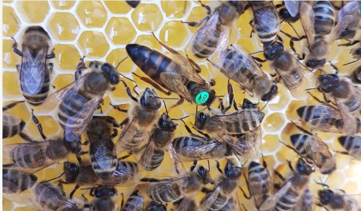 E WIE EINFACH kooperiert mit Impact Start-up HEKTAR NEKTAR und schenkt 250.000 Bienen ein neues Zuhause