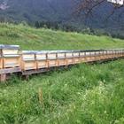 Tiroler Carnica 10 Waben Wirtschaftsvolk