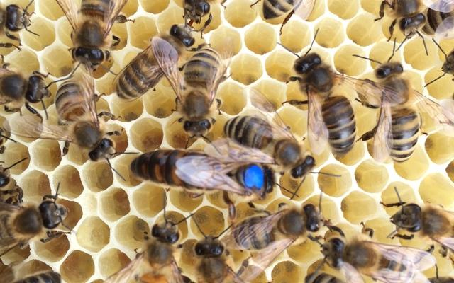 Online Bienen kaufen und verkaufen – offline mehr Zeit für ...