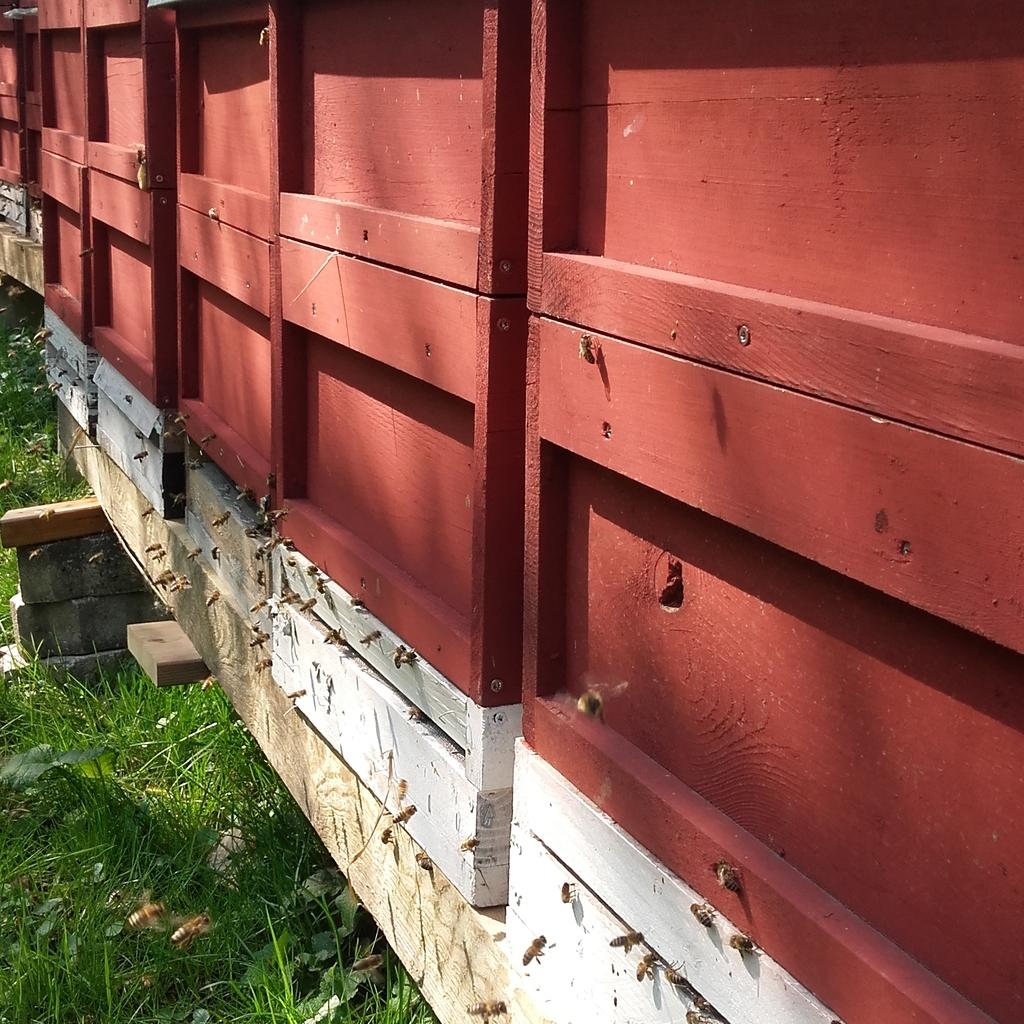 Bienenvolk -  Carnica
