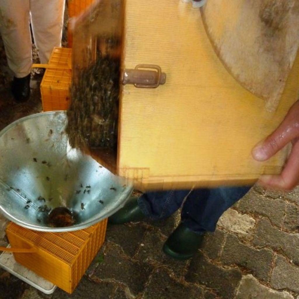 Kunstschwarm 1,5kg mit Carnica Königin