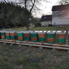 Wirtschaftsvolk Carnica F1 Nachzucht Zander