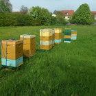 Carnica Bienenvolk 1 Zarge Dt. Normalmaß