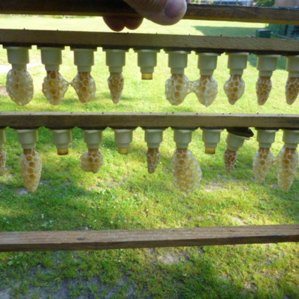 Bienenköniginnen Buckfast