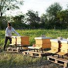 Bienenvolk, Carnica von zertifizierter und kontrollierter Bio-Imkerei