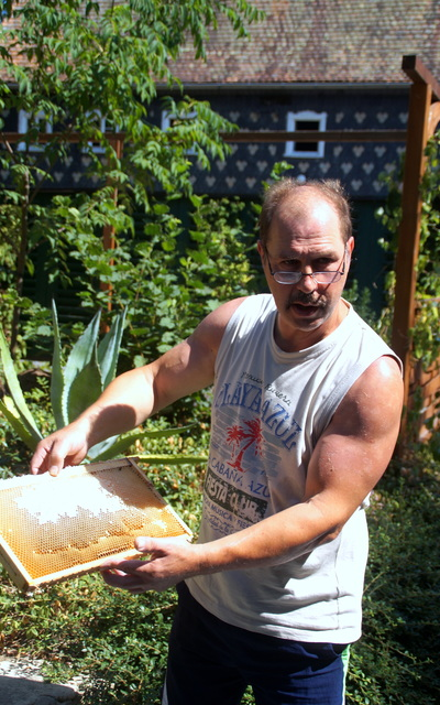 Bienenschwarm-Carnica