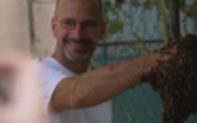 Dunkle Biene carnicabuckfastbegattet