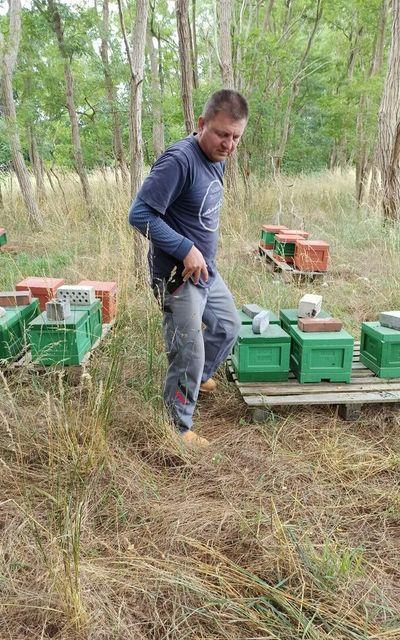 Bienenkönigin F1 Bienen Königin begattet 2020