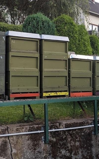 AGT Carnica Bienenvölker, Wirtschaftsvolk
