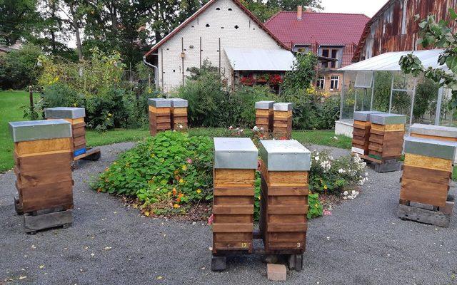 Bienenvolk oder Kunstschwarm mit einjaehriger oder neuer Koenigin zur Lindentracht